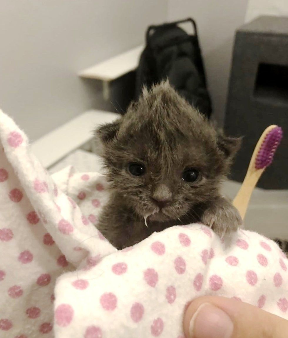 Kitten With Cute Bed Head Saved By Woman Who Found Her Abandoned