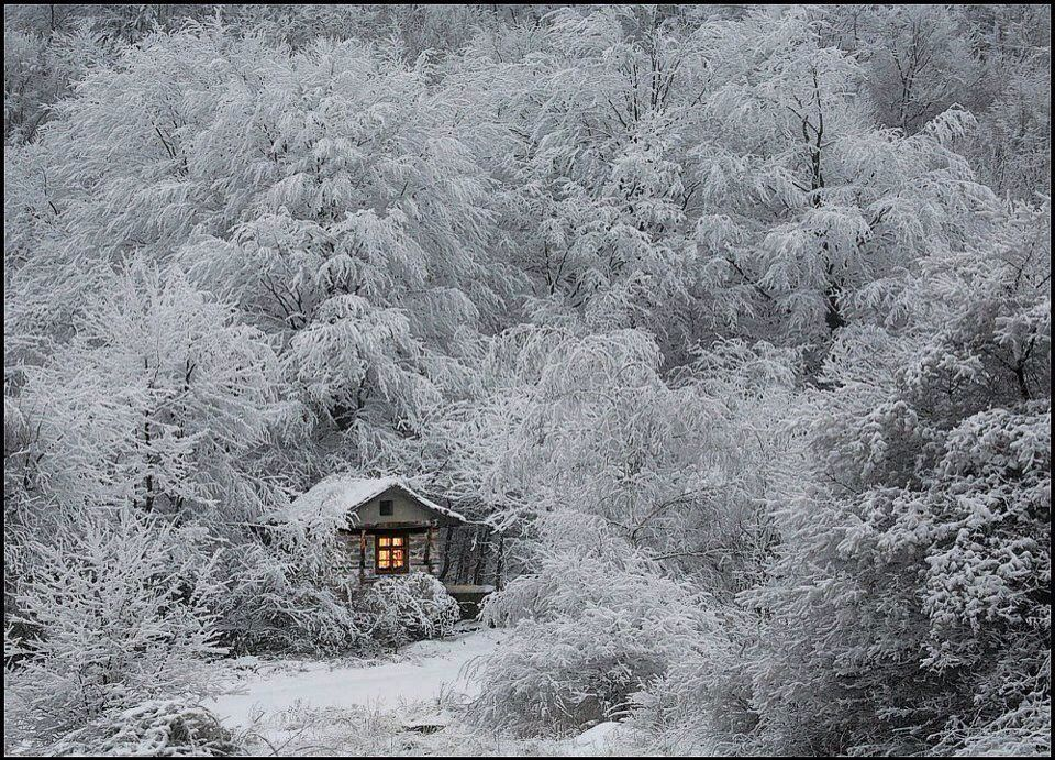 Cosy little house in snowy woods