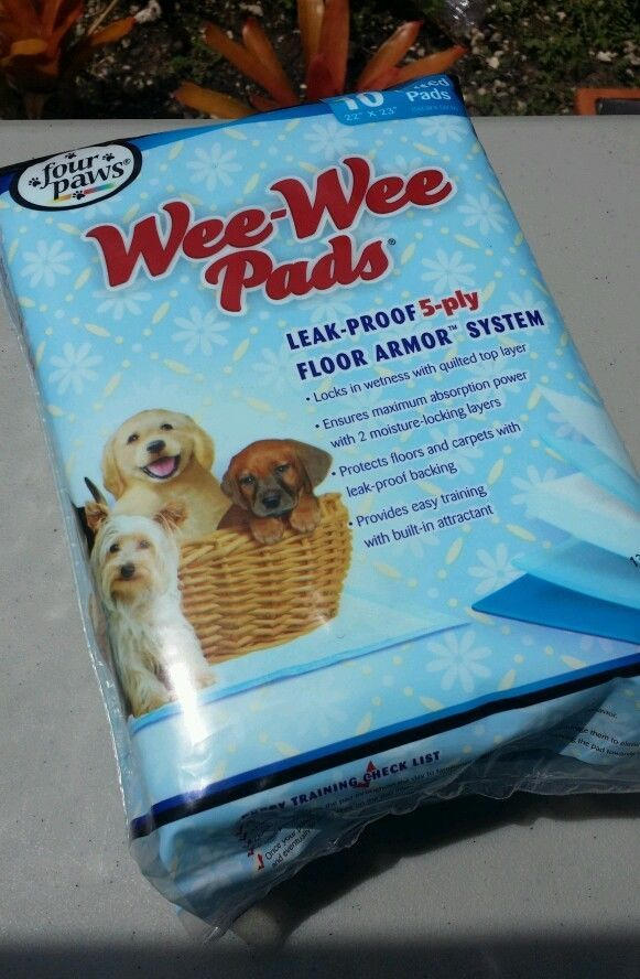 Four Paws Wee Wee Quilted Pads 10 Ct 22 X 23 Leak Proof Quick Free Shipping In Pet Supplies Dog Supplies Training Obedience Ebay Wee Wee Pads