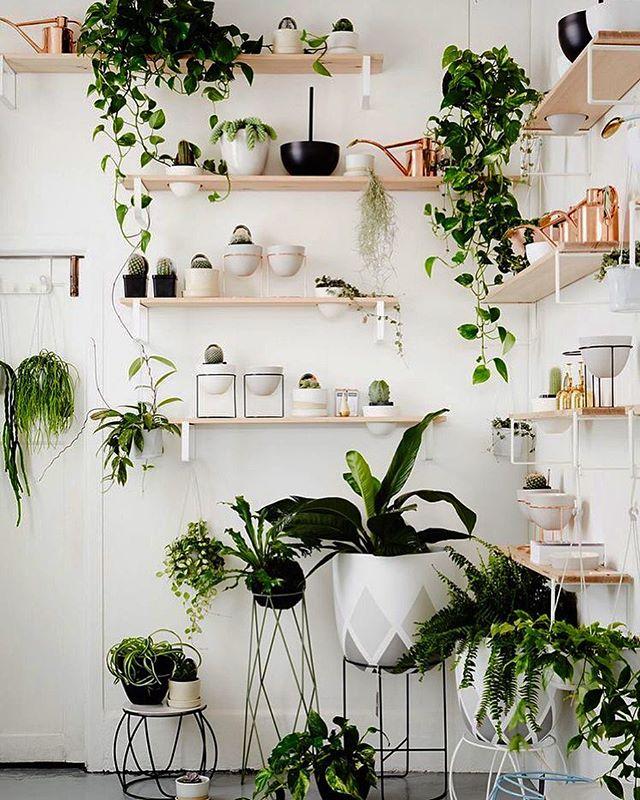 Regal Na Kwiaty Szukaj W Google Plants Indoor Apartment Plant Decor Succulents Decor