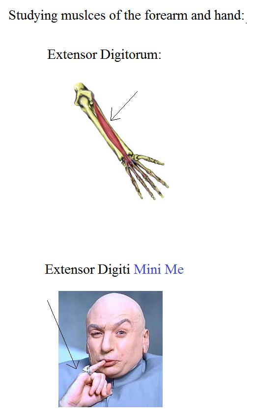 Ahhh Nerdy Anatomy Jokesd Lol Pinterest Med Student Quizzes