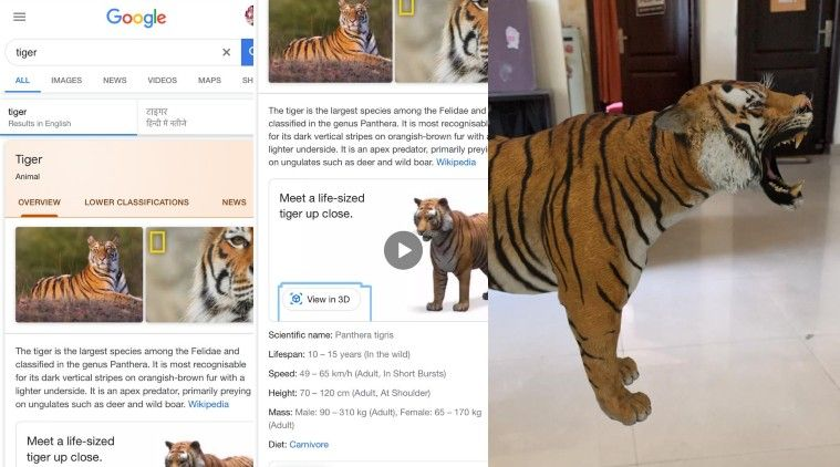 Google 3d Animals How To Watch Tiger Dog Panda Lion Peacock Duck Octopus Other Animals View In 3d Google Know Here In 2020 Animals Dogs Pet Dogs