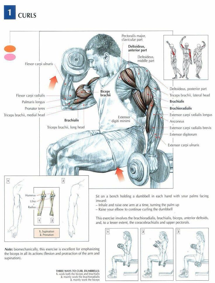 Gym focus anatomy | VIVA | GYM | ANATOMY | Pinterest | Anatomy, Gym ...