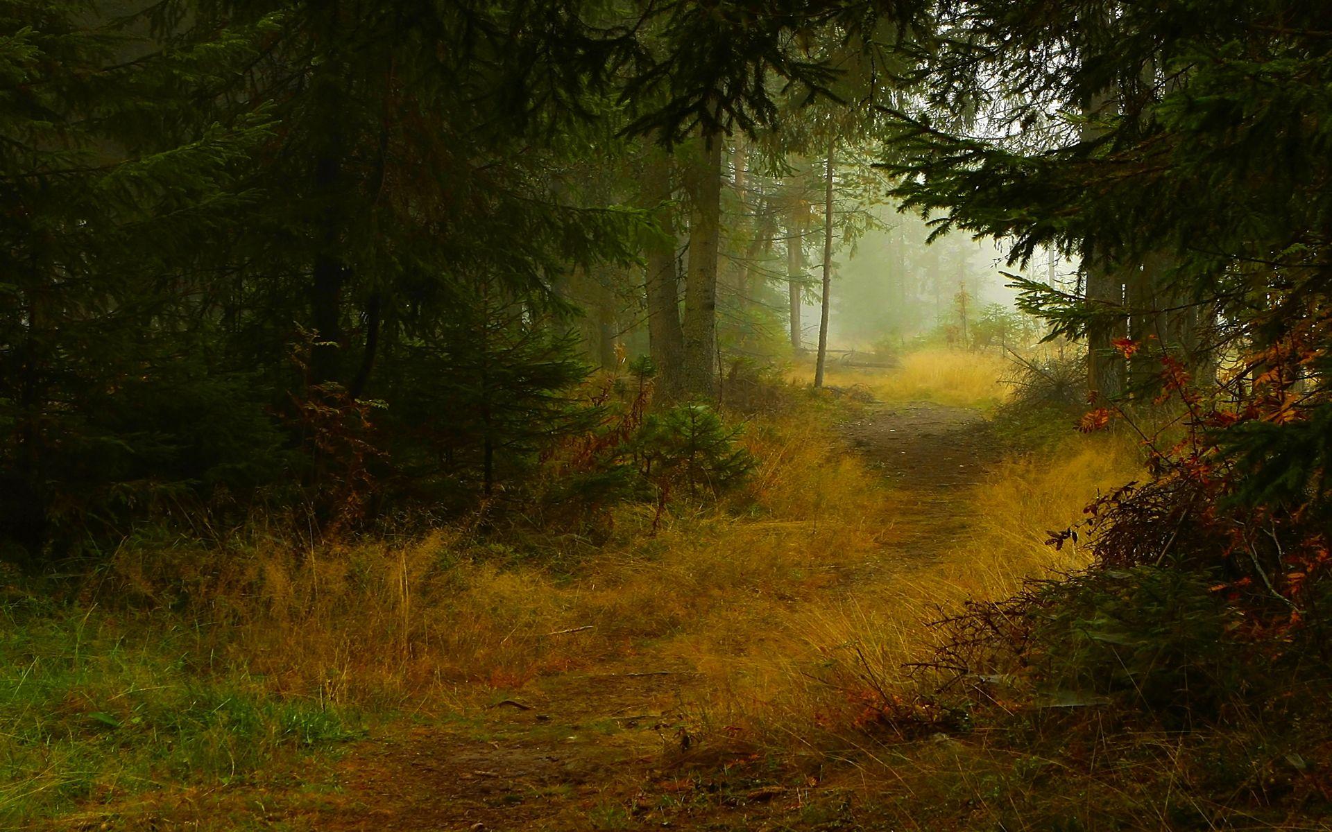 Dark Forest Trail wallpaper free