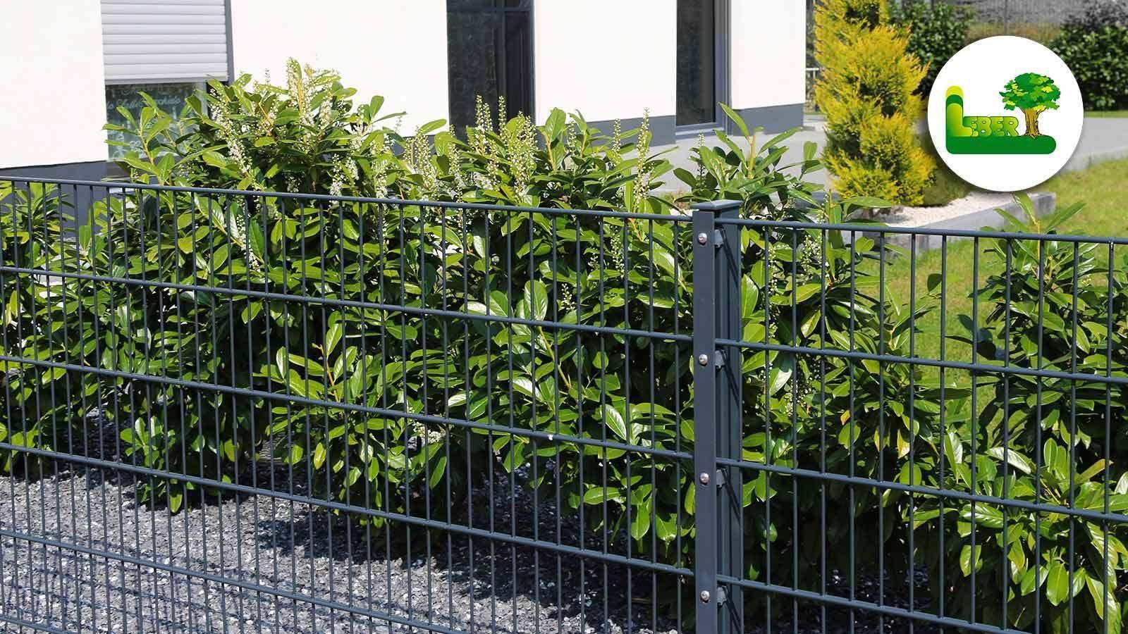 Doppelstabmattenzaun Doppelstabmattenzaun Garten Zaun