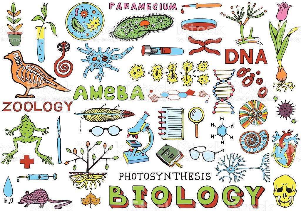 Hình ảnh có liên quan | Science doodles, Biology, How to draw hands