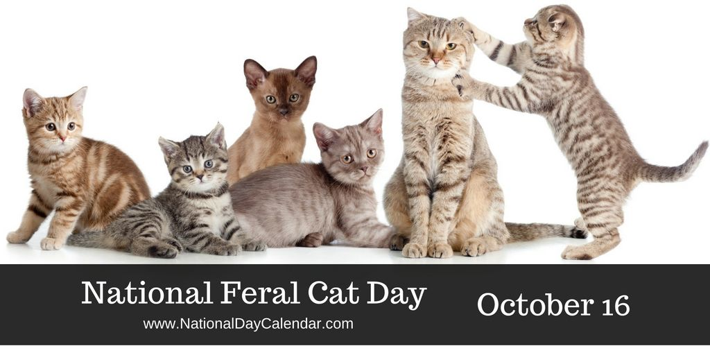 GLOBAL CAT DAY October 16 Cat day, National cat day
