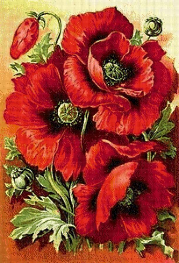 Похожее изображение | Маки цветы, Цветочные картины и Маки ...