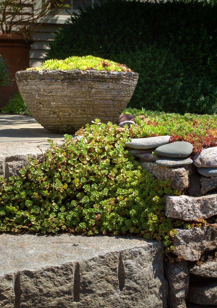 naturstein trockenmauer bepflanzen – geignete pflanzen für