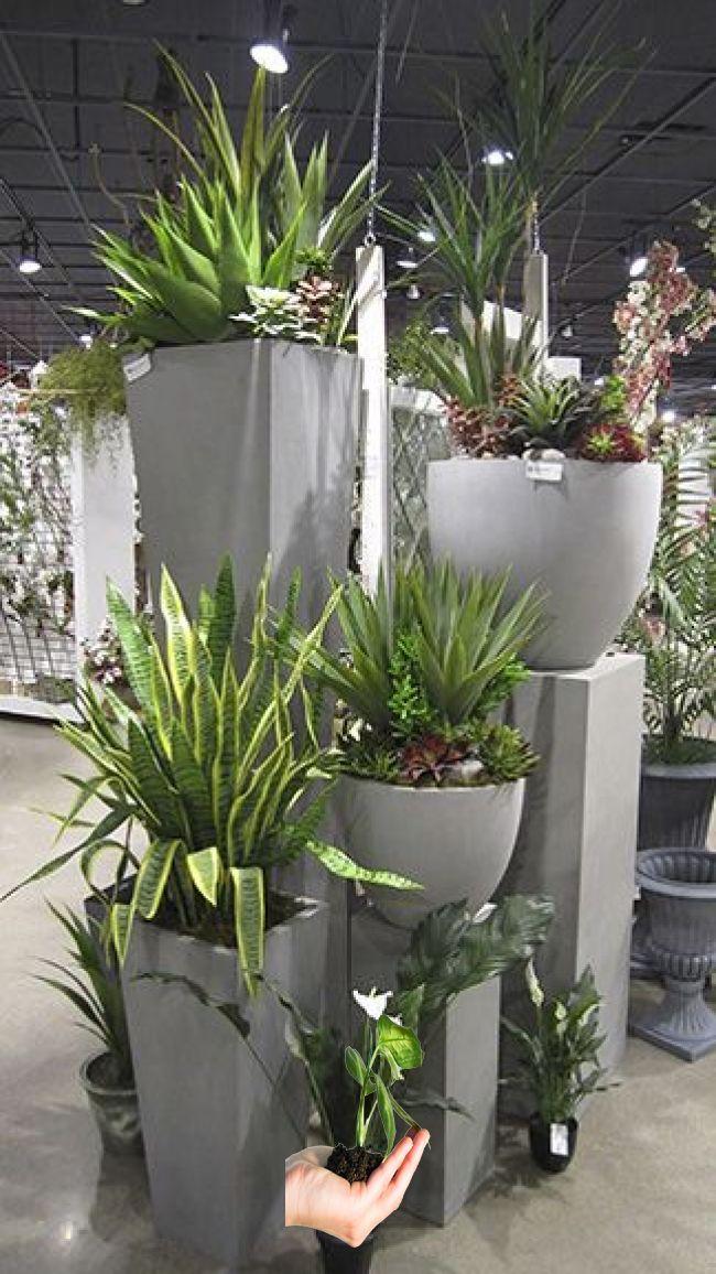 2017 Collection Casa Pinterest Plants Garden And Container Gardening 2017 Collection Casa Pinterest Potted Plants Outdoor Big Potted Plants Plants
