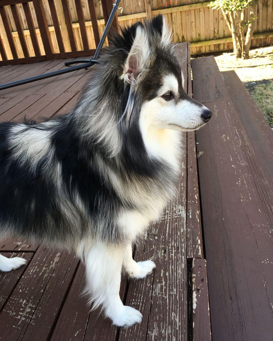 Pin On Puppy Training Help