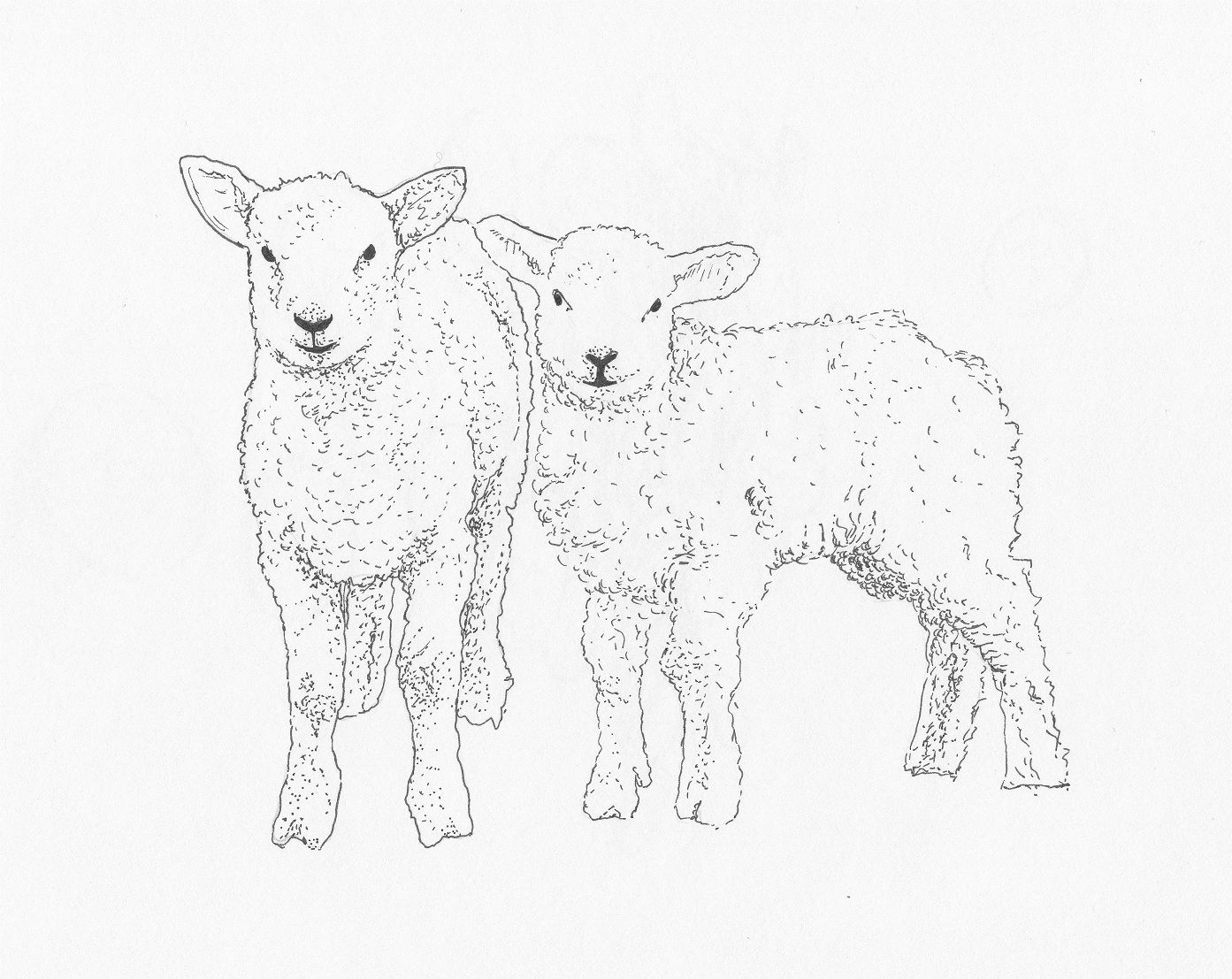 Sketch Of Sheep Lamb Sketch Templates Summer In 2019 Pinterest