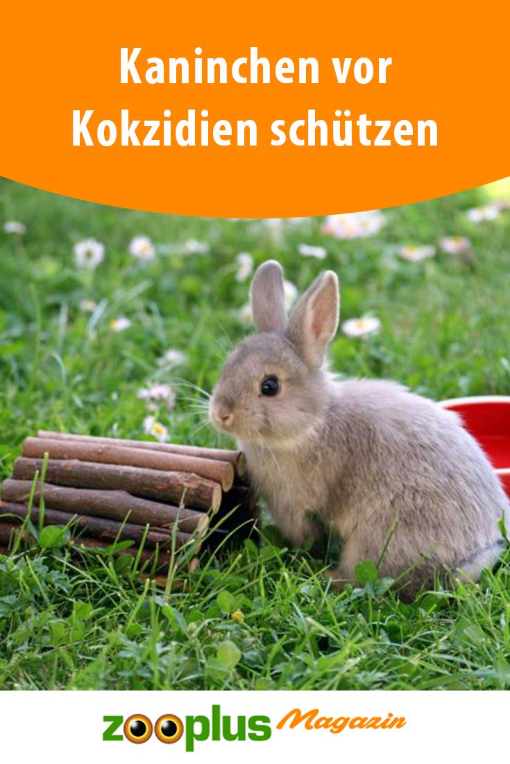 Pin Von Tatjana Suckau Auf Kaninchen In 2020 Kaninchen Kaninchen Ernahrung Kaninchen Spielplatz