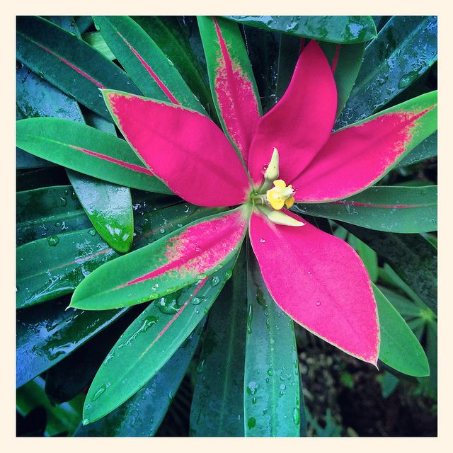Tropical Flowers For Florida Fairchild Garden Foliage Miami Plants Trees