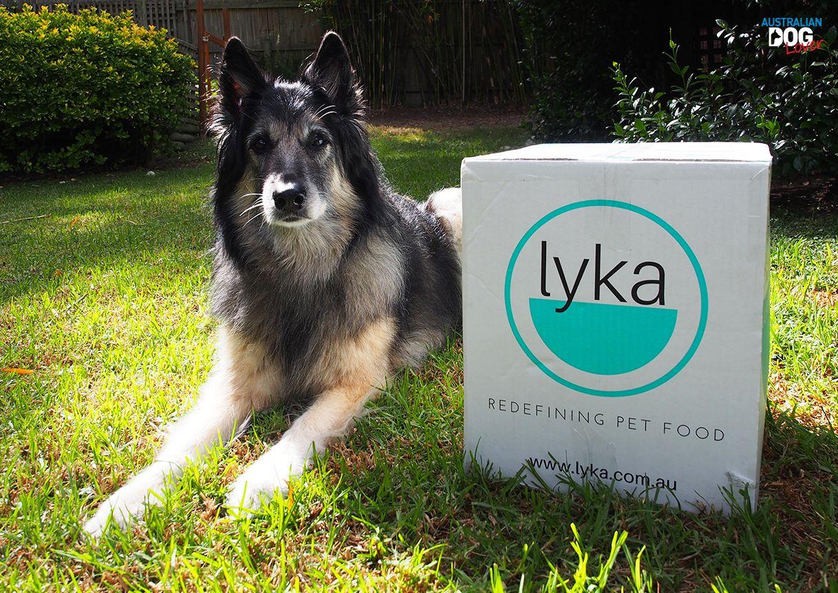 Lyka Pet Food Fresh Dog Food Delivery Review Australian