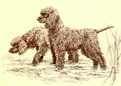 IRISH WATER SPANIEL dog portrait art canvas print of LAShepard painting 11x14
