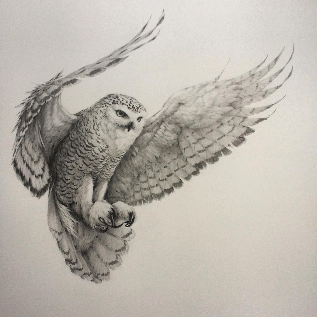 ' 'owl' Over Bar Hooting 've Finally Finished