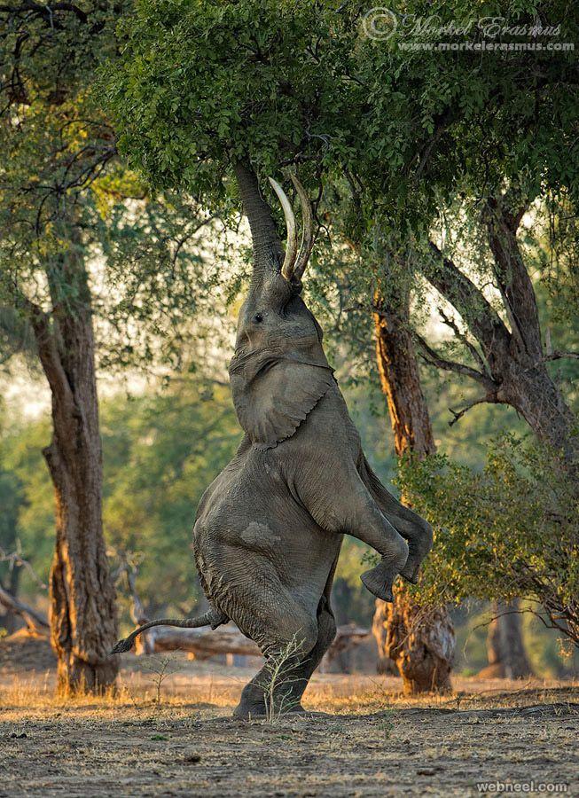 80 Best Award Winning Wildlife Photography Examples From Around The World Animals Beautiful Animals Animal Photography