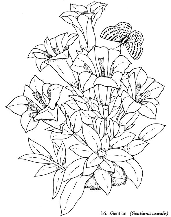 Welcome To Dover Publications Redout 233 Flowers Coloring