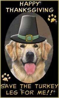 Golden retriever Thanksgiving