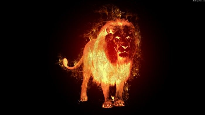 Fire Lion Wallpaper
