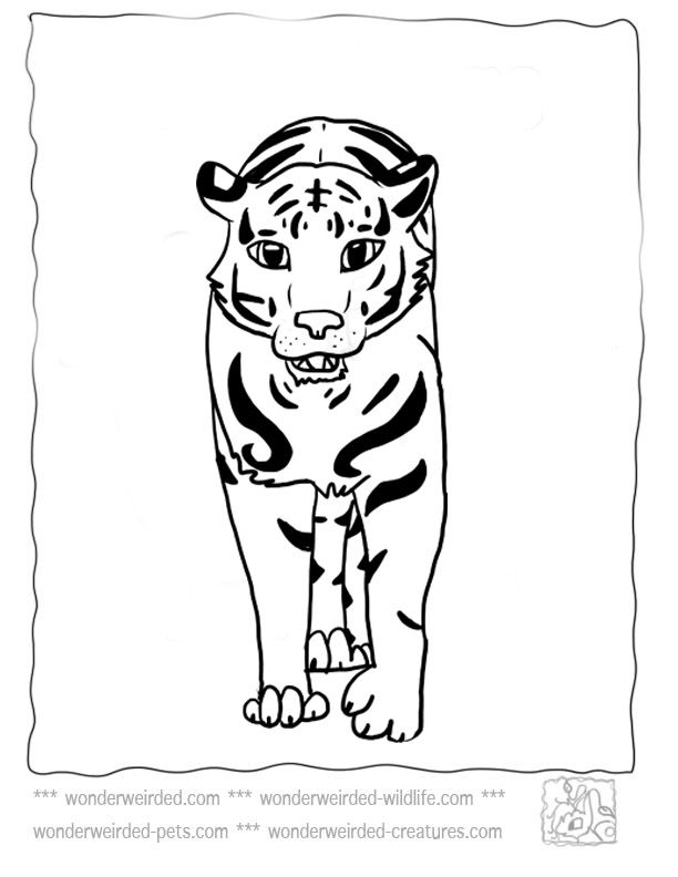 Tiger Coloring Pages At Wonderweirdedwildlife Rhpinterestca: Burgess Animal Coloring Pages At Baymontmadison.com