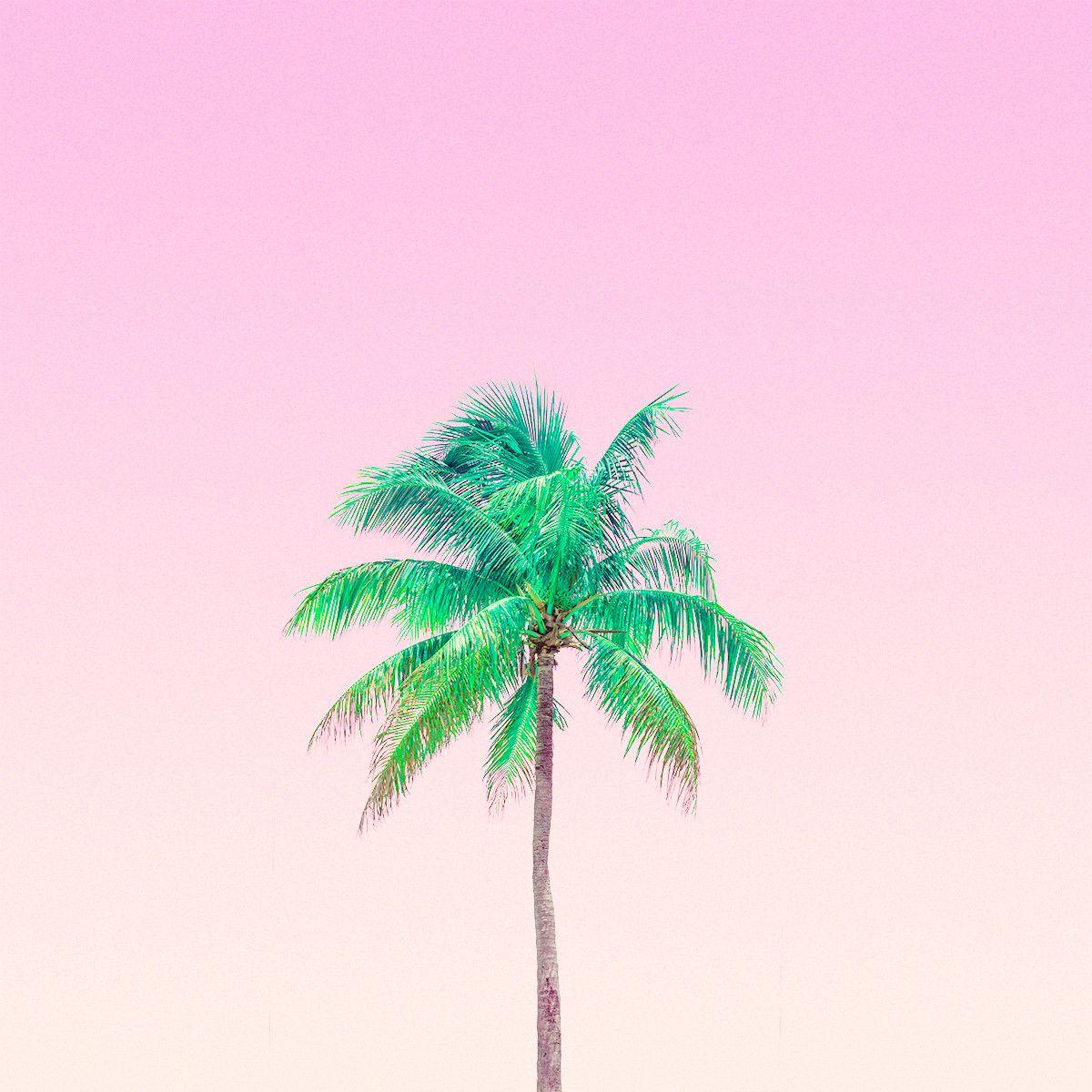 Tree Wallpaper Iphone, Summer Wallpaper