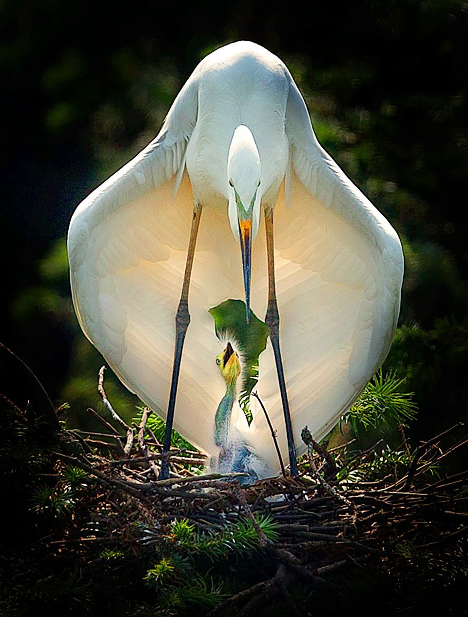 Mother S Embrace By Fuyang Zhou 2017 National Geographic Nature Photographer Of The Year Animals Beautiful Birds Animals Beautiful
