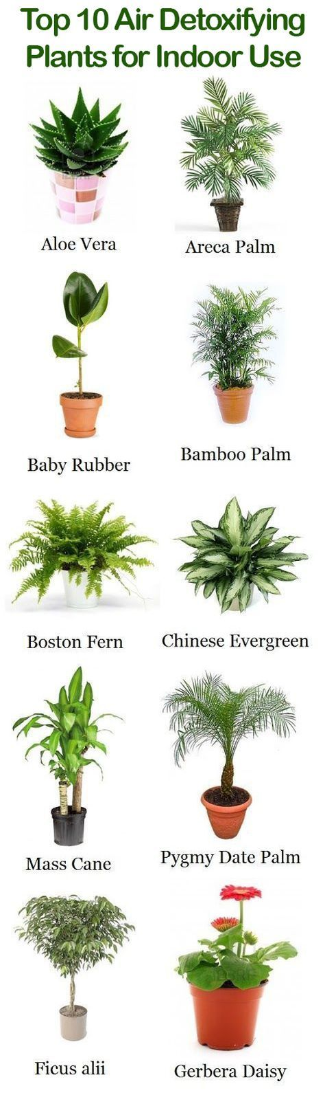 Top 10 Air Detoxifying Plants for Indoor Use Domácí