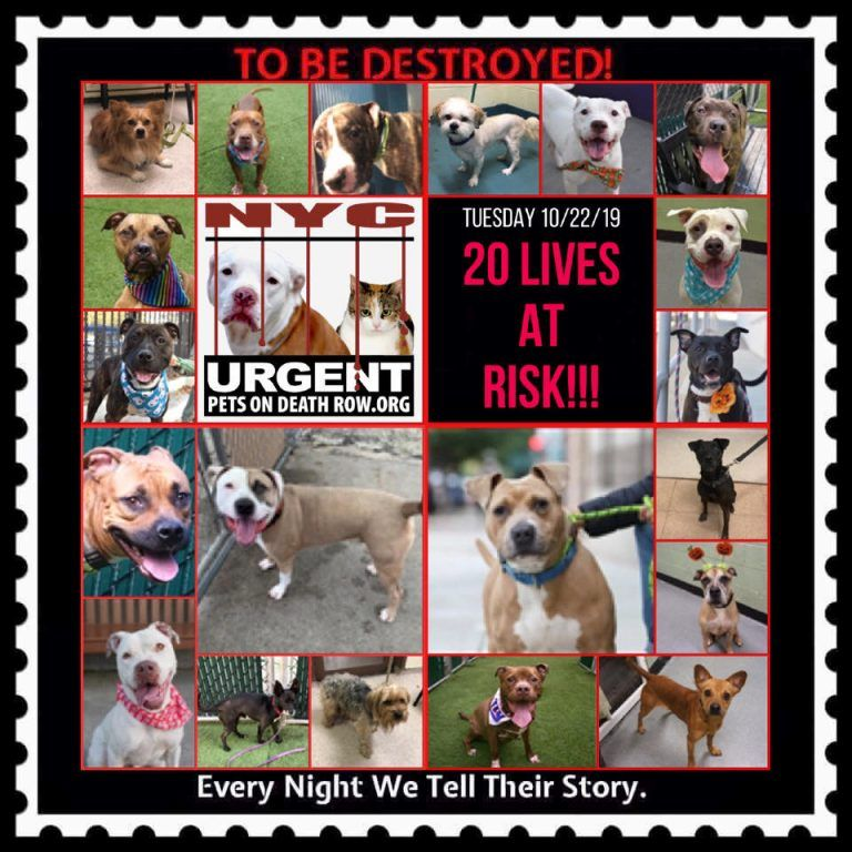 Dogs To Be Destroyed 10 22 19 Dogs Death Of A Pet Foster Dog