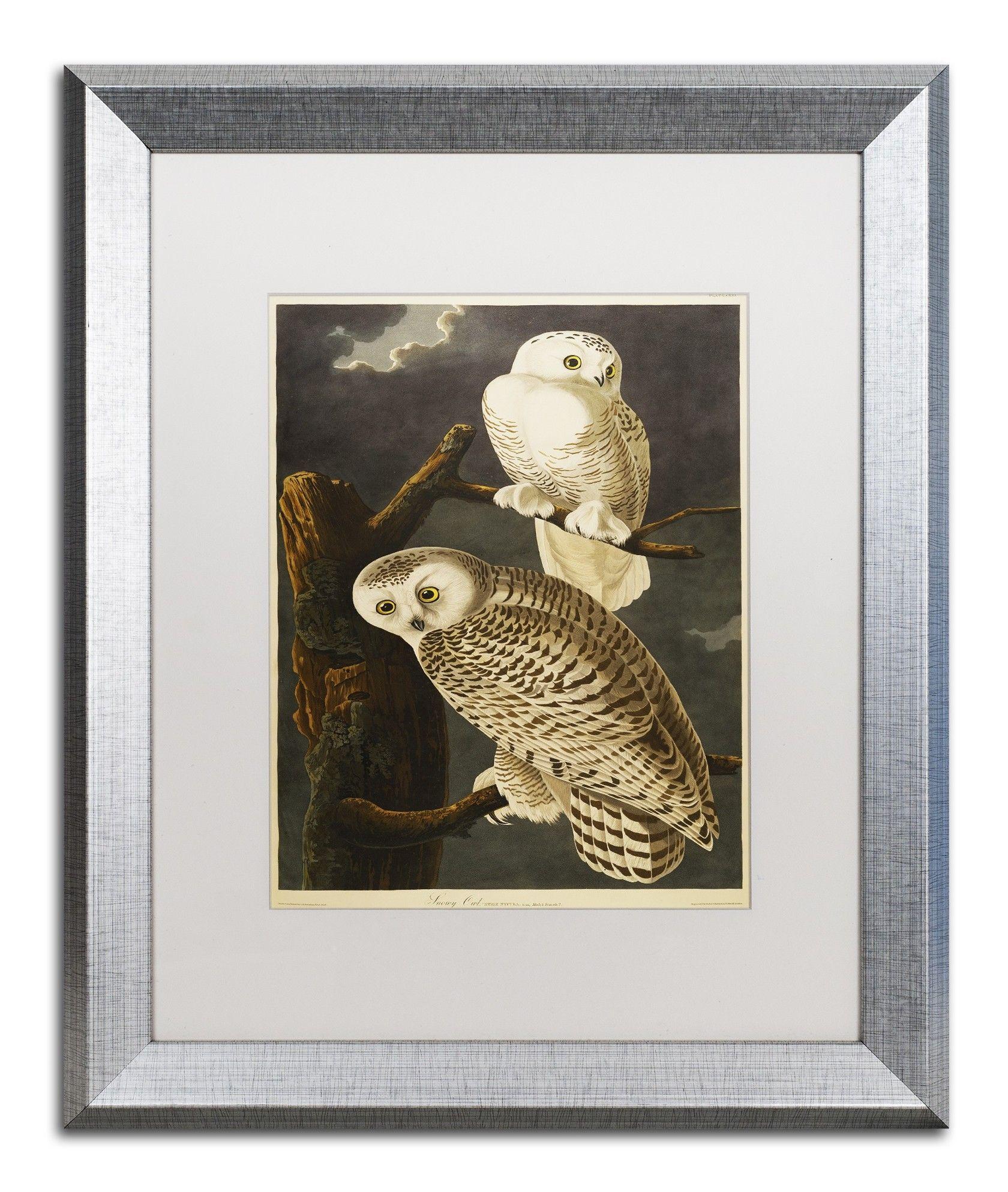 Snowy Owl By John James Audubon Framed Painting Print