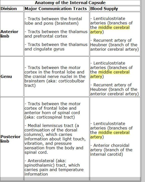 Internal Capsule Anatomy Pt Pinterest