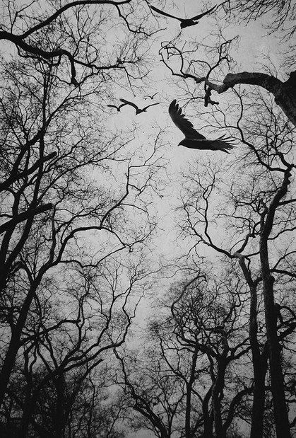 Voar Dentro De Si Florestas Sombrias Floresta Escura E