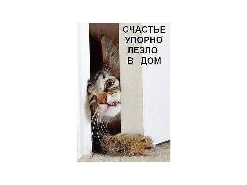 картинку счастье упорно лезет в глаза про кота: 10 тыс ...