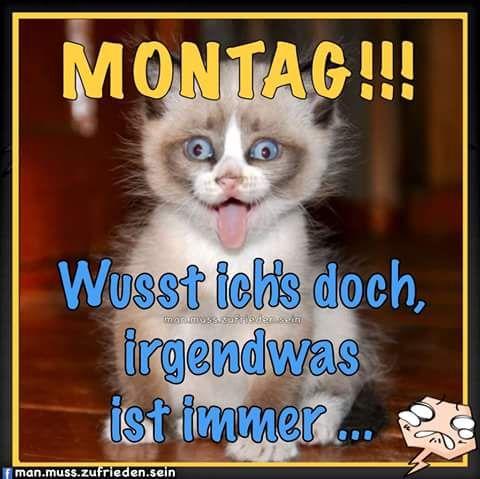 Pin Von Birgit Crews Auf Guten Morgen Guten Tag Lustige