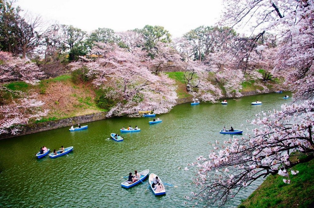 Cherry Blossom Tokyo 2020 Forecast 14 Best Place To See Cherry Blossoms In Tokyo Living Nomads Travel Tips Guides News Information Cherry Blossom Cherry Blossom Japan Tokyo