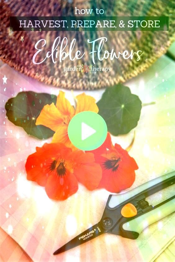 Preparing and Storing Edible Flowers  tips on the best ways for harvesting preparing and storing edible flowers for culinary useHarvesting Preparing and Storing Edible Fl...