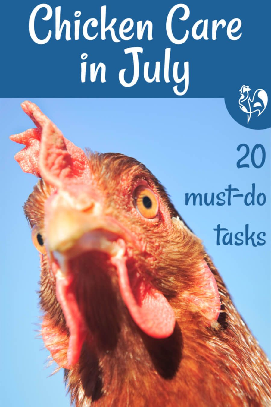 July in the chicken coop: care for your flock safely in ...