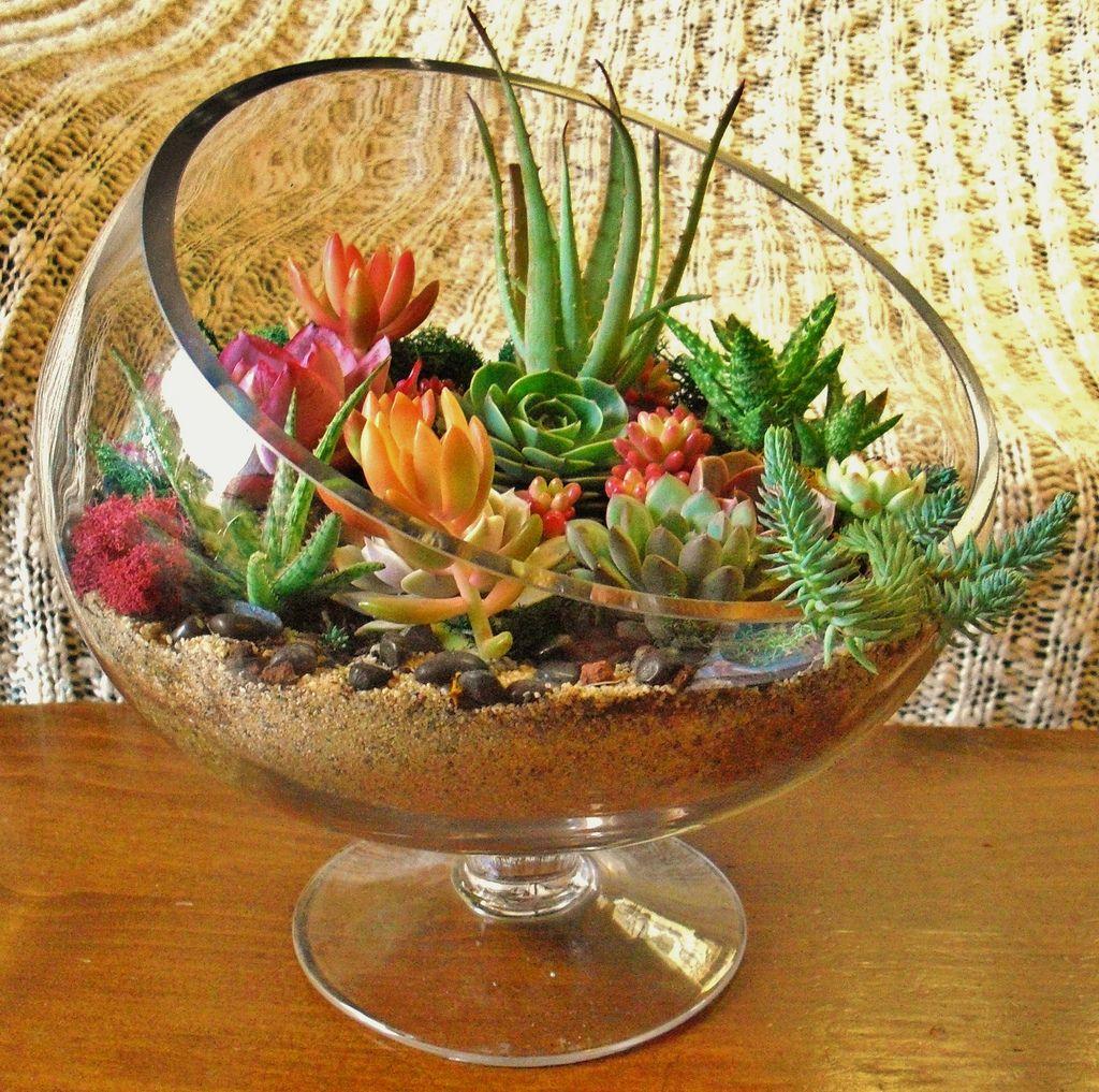 Sunshine & Succulents | Sunshine, Terraria and Plants