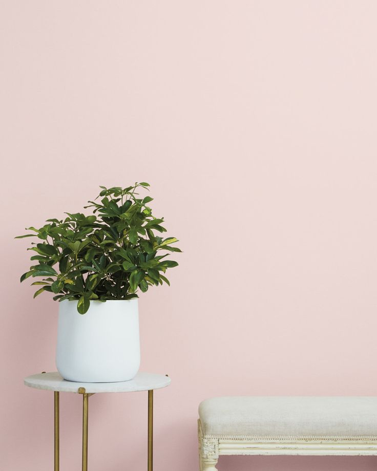 Baby Soft | Classic Pink Paint Color | Clare