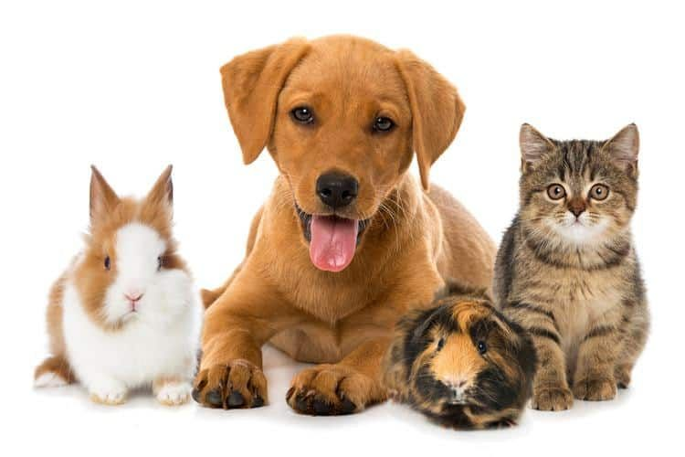 How To Write An Effective Pet Review From An Owners Perspective Pets Pet Day Cute Animals
