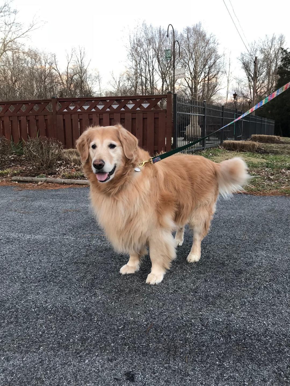 Adopt Nani On Dogs Golden Retriever Retriever Dog Golden