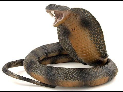 As Cobras Mais Perigosas Do Mundo Com Imagens Cobras Fotos De