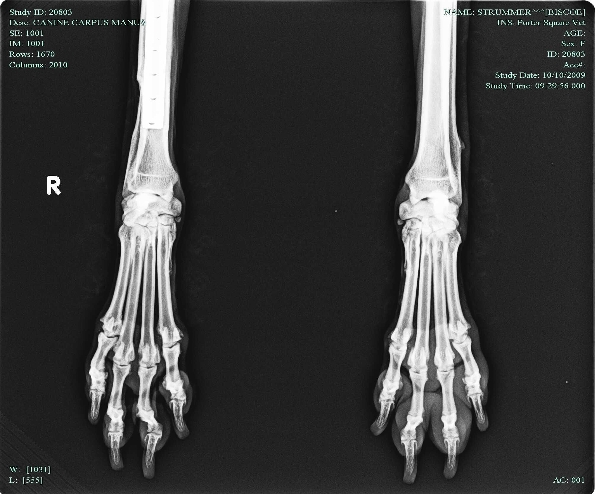 Dog Paw Xray this is the x ray they took of strummer s