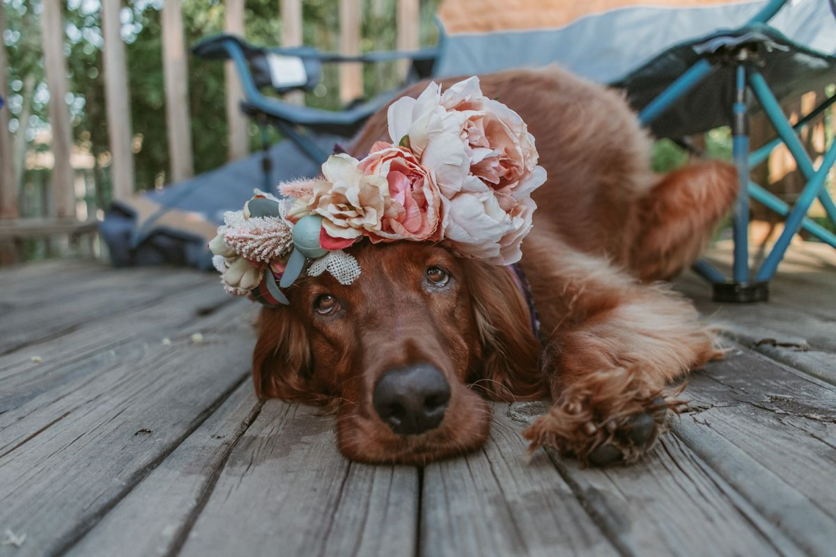 Flower Girl In 2020 Dog Friends Cute Cows Hiking Dogs