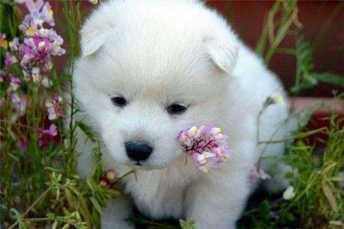 Resultado de imagen para imagenes perritos lindos