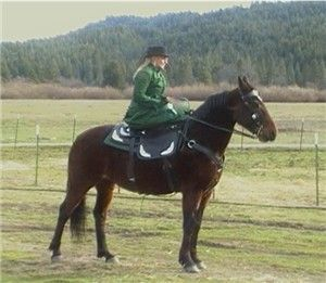 Sidesaddle with Heidi Graham--II KNOW HER!!!!! MY OLD HORSE JAZZABELL WAS HER OWNER!!!! SHE IS AMAZING!!!