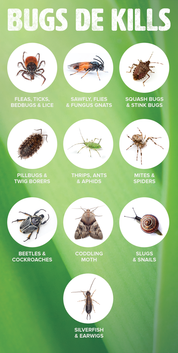 What Is Diatomaceous Earth Household Pests Garden Pest Control Organic Gardening Pest Control