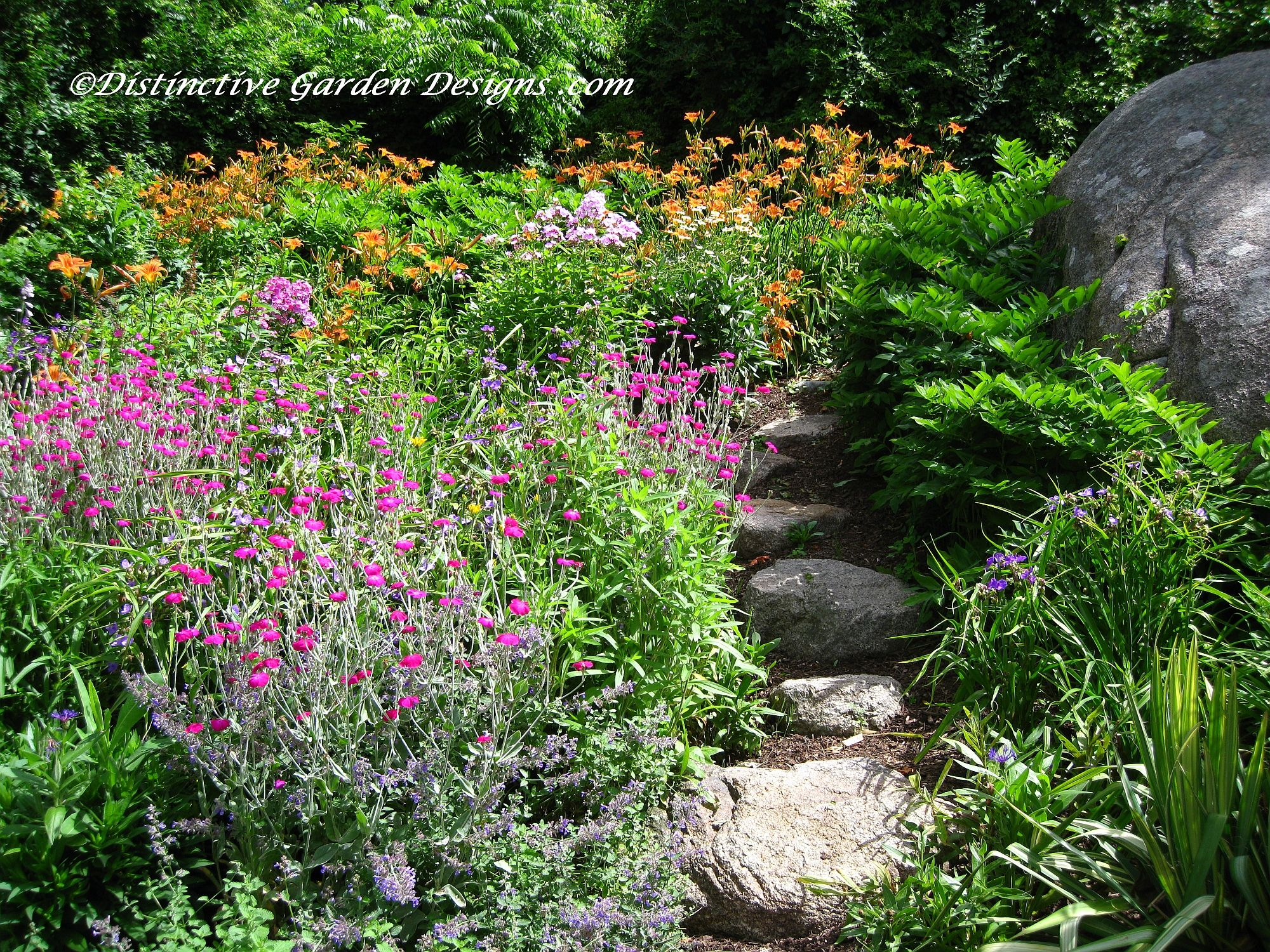 Cottage garden path lycnis and fulva daylilies for Garden path