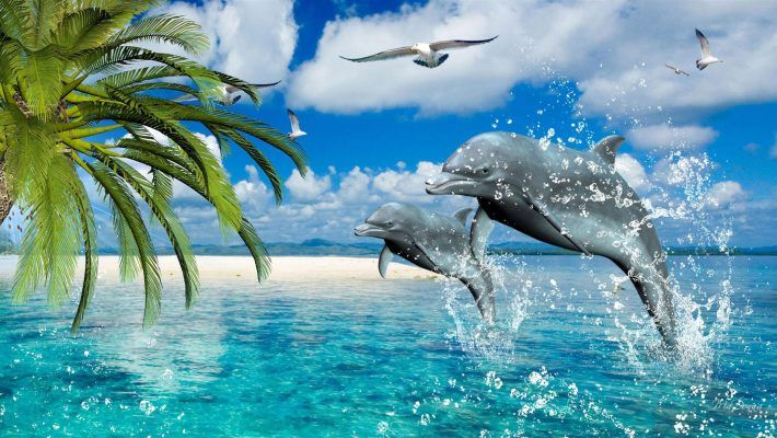 Dolphins Summer Sea Gulls Palm Desktop Wallpaper Hd For Mobile Phones And Laptops 2560 1440 Dolphin Wallpaper Dolphin Images Dolphins Full hd dolphin wallpapers hd desktop